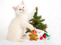 Gatito de Ragdoll con el árbol de navidad y los juguetes Fotografía de archivo