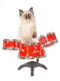 Gatito de Ragdoll con el mini conjunto de tambores rojos Fotos de archivo libres de regalías