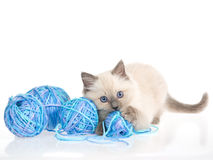 Gatito de Ragdoll con las bolas del hilado azul Foto de archivo