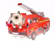 Gatito de Ragdoll en coche de bomberos rojo Fotos de archivo