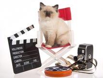 Gatito de Ragdoll en silla del director con los apoyos de la película Imagen de archivo