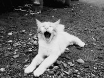 Gatito de risa Imagen de archivo libre de regalías