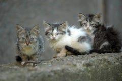 Gatito de tres desamparados Foto de archivo libre de regalías
