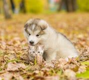 Gatito del abarcamiento del perrito en parque del otoño Fotografía de archivo libre de regalías