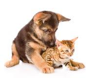 Gatito del abarcamiento del perro de perrito del pastor alemán Aislado en blanco Imagen de archivo