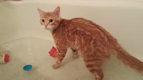 Gatito del agua Foto de archivo