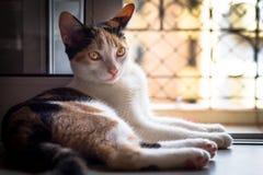 Gatito del baño de Sun Imagen de archivo