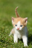Gatito del bebé Foto de archivo libre de regalías