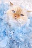 Gatito del encanto Fotografía de archivo