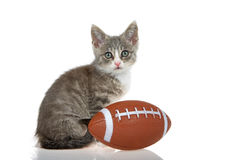 Gatito del gato atigrado con fútbol aislado en el fondo blanco fotografía de archivo libre de regalías