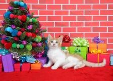Gatito del gato atigrado debajo del árbol de navidad Foto de archivo libre de regalías