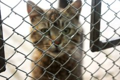 Gatito del gato atigrado que mira hacia fuera de detrás las barras de su jaula fotos de archivo libres de regalías
