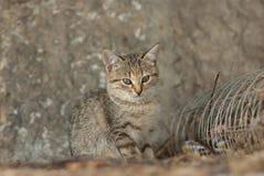 Gatito del gato atigrado que oculta usando la misma coloración como alrededores fotografía de archivo