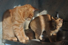 Gatito del jengibre con la grúa Fotos de archivo