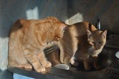 Gatito del jengibre con la grúa Foto de archivo