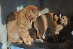 Gatito del jengibre con la grúa Fotografía de archivo libre de regalías
