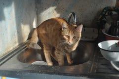 Gatito del jengibre con la grúa Fotografía de archivo