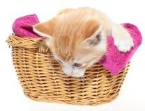 Gatito del jengibre en cesta imagen de archivo
