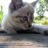 Gatito del jengibre en la tabla de madera Imagen de archivo