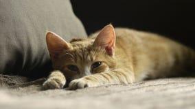 Gatito del jengibre que miente en tomar una siesta del sofá y del reloj Imágenes de archivo libres de regalías