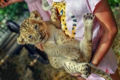 Gatito del leopardo en las manos de un pequeño niño fotos de archivo libres de regalías