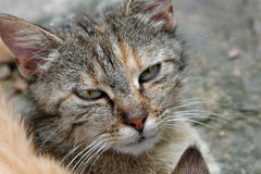 Gatito del Moray imagenes de archivo