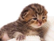 Gatito del recién nacido Imagen de archivo