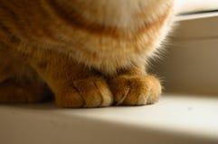 Gatito del rojo de las patas Imagen de archivo