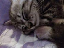 Gatito del sueño dulce fotografía de archivo