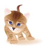 gatito del tabby del jengibre Imágenes de archivo libres de regalías