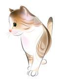 gatito del tabby del jengibre. Imagen de archivo libre de regalías