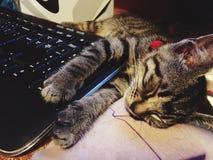 Gatito del teclado Fotografía de archivo libre de regalías