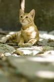 Gatito delicado Fotos de archivo libres de regalías
