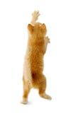 Gatito derecho fotografía de archivo