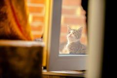 Gatito detrás del vidrio Fotografía de archivo libre de regalías