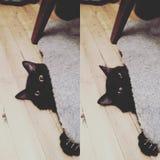 Gatito disimulado fotografía de archivo libre de regalías