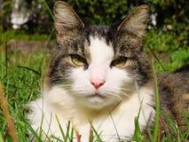 Gatito disimulado fotos de archivo