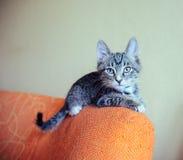 Gatito divertido Fotos de archivo libres de regalías