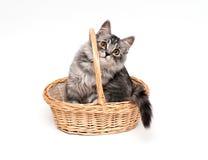 Gatito divertido en la cesta Fotografía de archivo libre de regalías