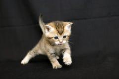 Gatito divertido en un fondo oscuro Fotos de archivo libres de regalías