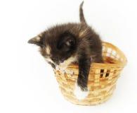 Gatito divertido juguetón en la cesta de mimbre Fotografía de archivo