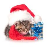 Gatito dormido Foto de archivo libre de regalías