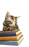 Gatito dormido en los libros viejos Imágenes de archivo libres de regalías