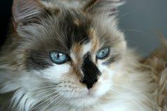 Gatito dulce Fotografía de archivo libre de regalías