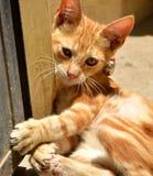 Gatito dulce Foto de archivo libre de regalías