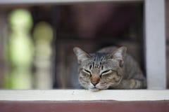 Gatito el dormir. Imagen de archivo