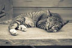 Gatito el dormir imágenes de archivo libres de regalías