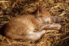 Gatito el dormir Foto de archivo libre de regalías