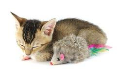 Gatito el dormir y ratón del juguete Foto de archivo libre de regalías