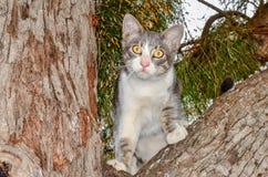 Gatito en árbol Fotos de archivo